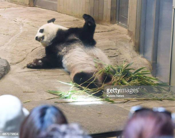 Shin Shin an 11yearold female panda is seen at Tokyo's Ueno Zoological Gardens on May 23 2017 The zoo said it will stop displaying the giant panda...