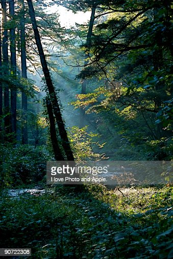 Shines : Stock Photo