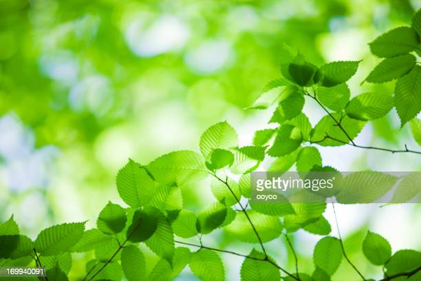 Glitzernde grüne Blätter
