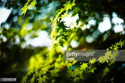 Shining Green : Stock Photo