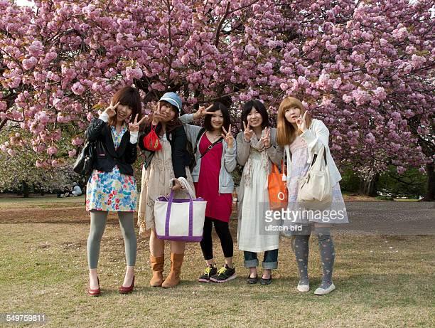 Shinjuku Gyoen National Garten Tokio im Fru¨hling mit 5 Ma¨dchen unter Kirschblu¨ten