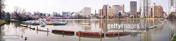 Shinobazu pond