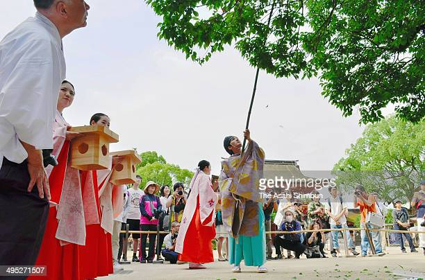 A shinto priest hits branches of plum trees with a bamboo to drop plums during the plum dropping ritual at Dazaifu Tenmangu Shrine on June 1 2014 in...