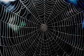 Large spider web covering the whole frame, taken in Sweden early autumn, early morning.
