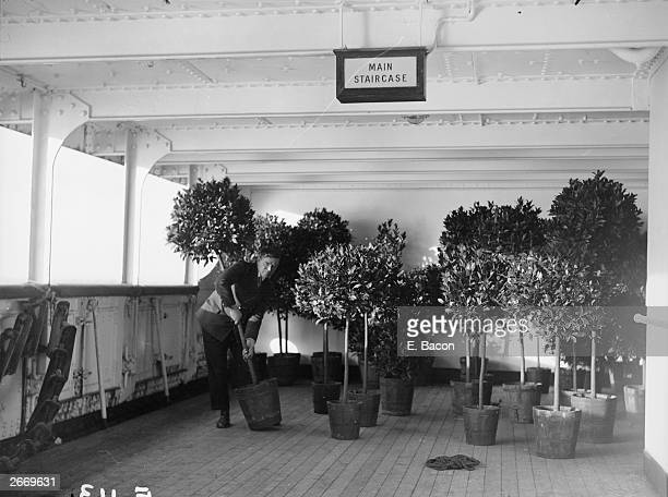 A ship's gardener on the Cunard liner Berengaria takes stock of his bay trees on the main staircase