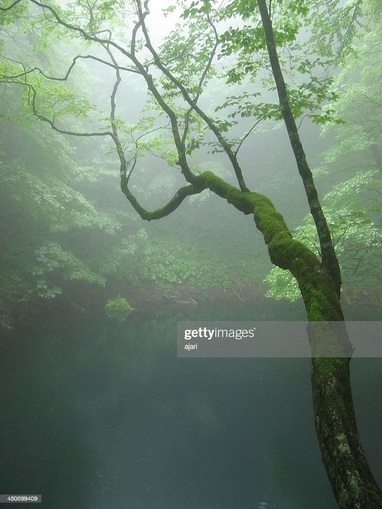 Shirakami-Sanchi : Stock Photo