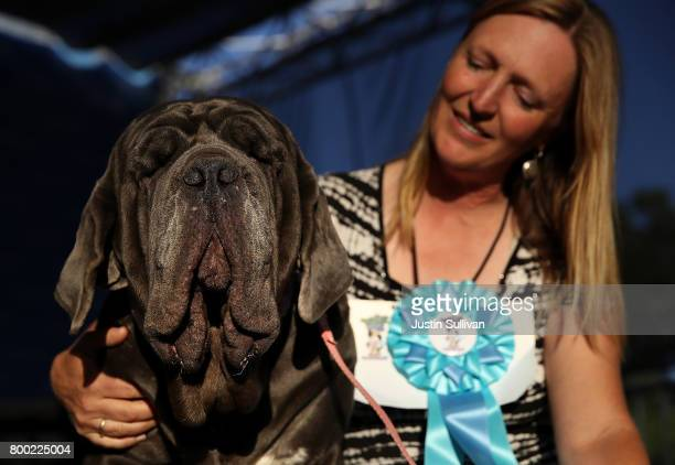 Shirley Zindler of Sebastopol California sits with her Neapolitan Mastiff named Martha after after winning the 2017 World's Ugliest Dog contest at...
