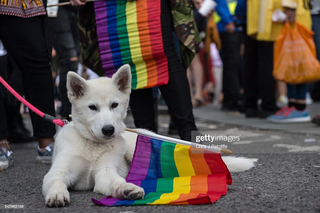 Shiro, a Siberian Husky, plays with a rainbow flag as the LGBT community celebrates Pride in London on June 25, 2016 in London, England. Across the city performances and speeches take place as a parade makes it way through the centre ending in Trafalgar Square. 2016 Pride in London comes just two weeks after Omar Mateen shot dead 50 people at Pulse, a gay nightclub in Orlando, Florida.
