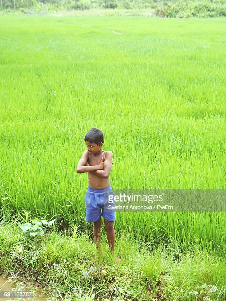 Shirtless Boy Standing On Green Rice Paddy Field