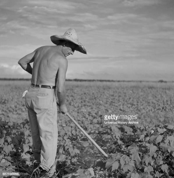 Shirtless Farmer Hoeing Cotton Allen Plantation Cooperative Association near Natchitoches Louisiana USA Marion Post Wolcott for Farm Security...