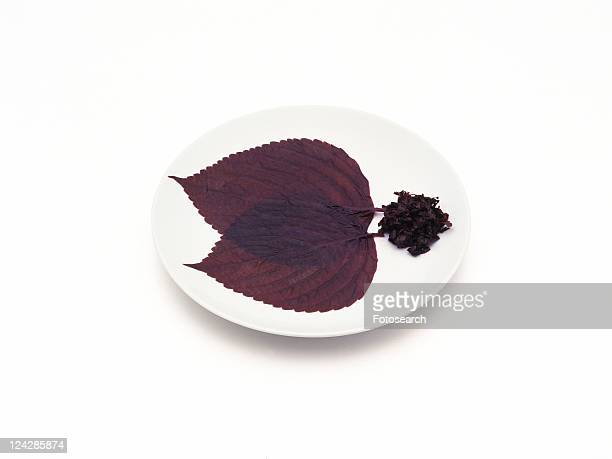 Shiso leaves on white plate, red perilla, high angle view
