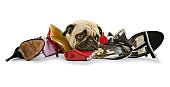 Shoes to Chew From