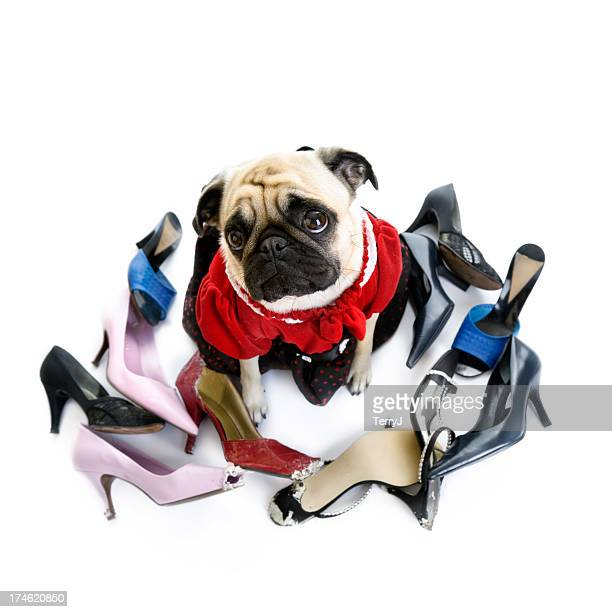Masticarlos de zapatos
