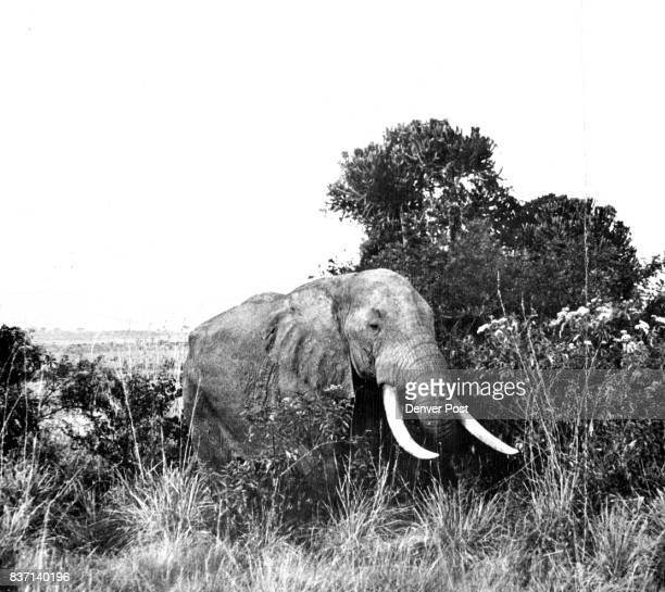 Shooting elephants with a camera is much more fun and much more practical The behemoths are not hard to track down but it takes wellplaced shots from...