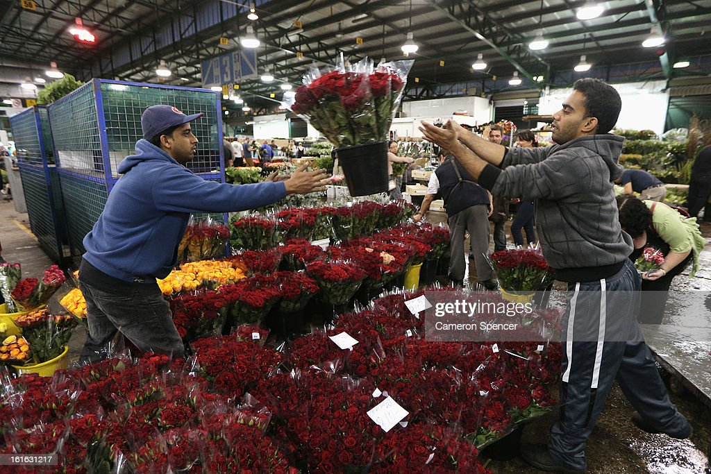 Shop keepers organise flowers for sale on Valentines Day at Sydney Flower Market on February 14, 2013 in Sydney, Australia. Due to an unusually hot January in Australia an increasing number of roses have been sourced from South America and Africa to ensure Valentines supplies don't run out.