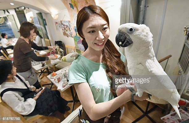 A shop staff puts an umbrella cockatoo in her hand at a bird cafe in Tokyo on Oct 28 2016 Yuki Sakata the store manager said she wants visitors to...