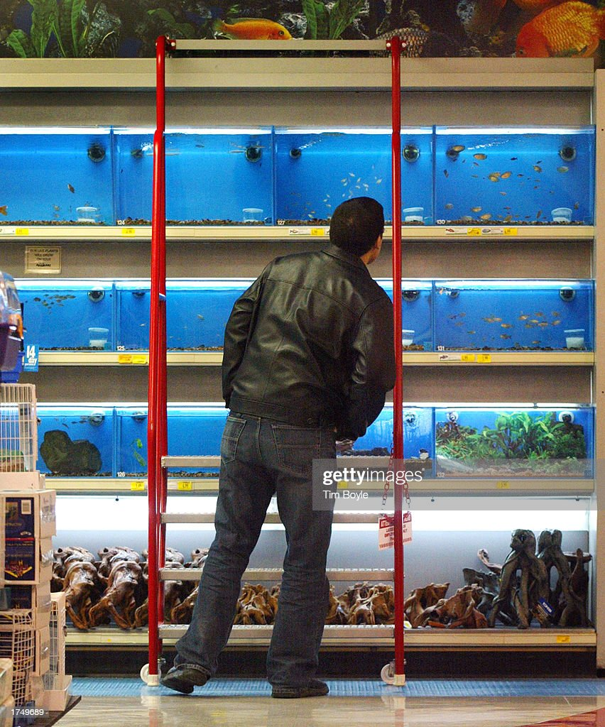 Gallery getty images for Fish and more pet store