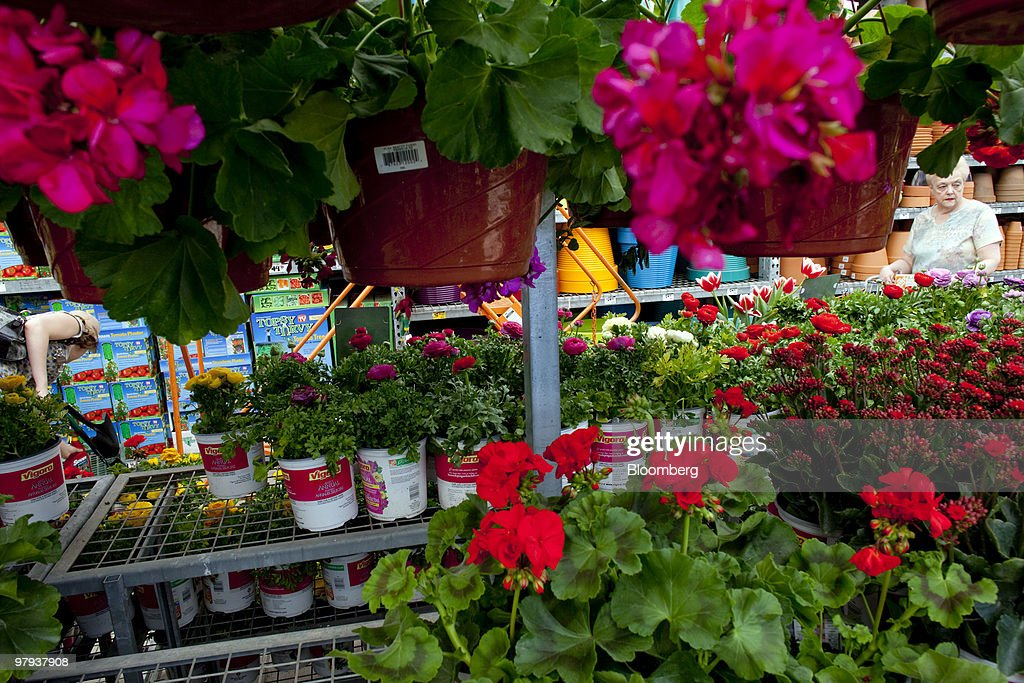 Home Depot Offers 2 For 1 Petunias Discounts To Revive