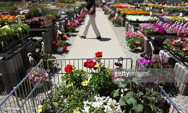 Shopping Cart of Flowers