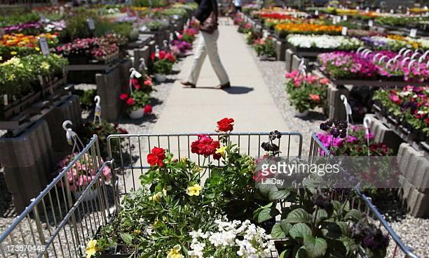 ショッピングカートの花