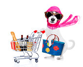 crazy and silly terrier dog diva lady with bag pushing  full of products supermarket cart , isolated on white background