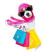 crazy and silly terrier dog diva lady with shopping bag, isolated on white background, behind banner and placard