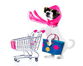 crazy and silly  poodle dog diva lady with bag pushing  empty supermarket cart , isolated on white background