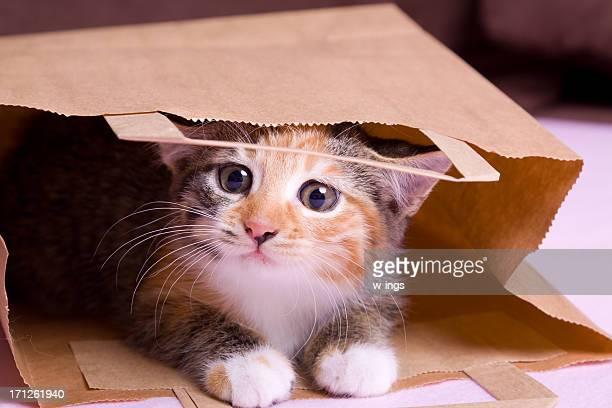 shopping gattino