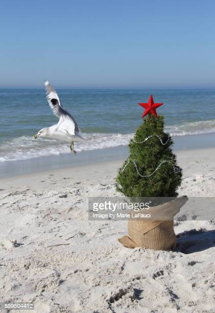 A shore bird flying by a real Christmas tree at the beach