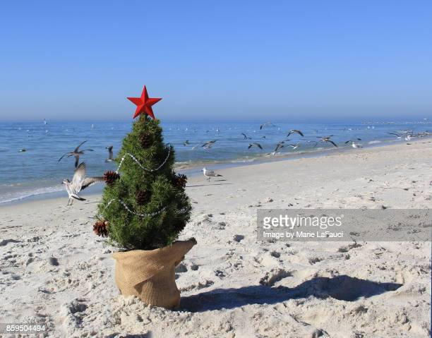 Shore birds flying by a Christmas tree on the beach