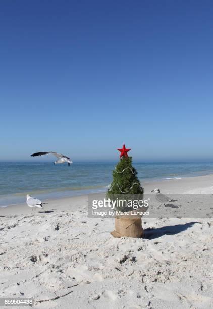 Shore birds gathering near a Christmas tree on the beach