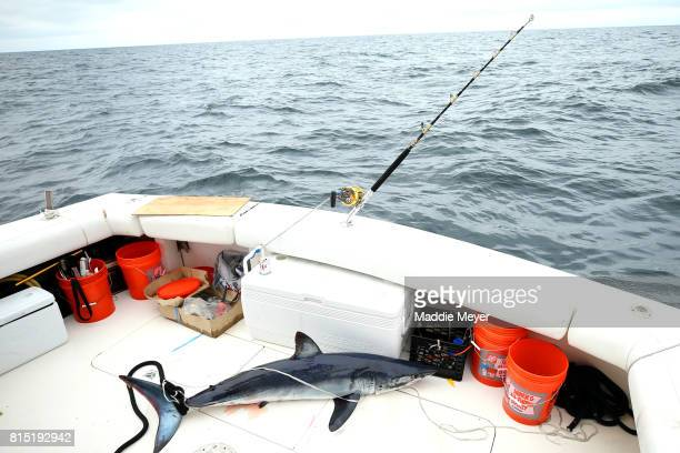 A shortfin mako sits on the stern of the Kalida during the North Atlantic Monster Shark Tournament on July 14 2017 in New Bedford Massachusetts The...