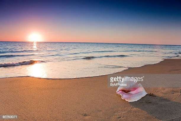 A shot of a conch shell on a beach evening