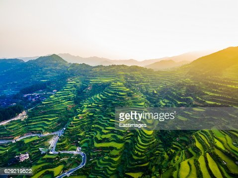 WS AERIAL shot of green rice terraces in morning,Guizhou,China.