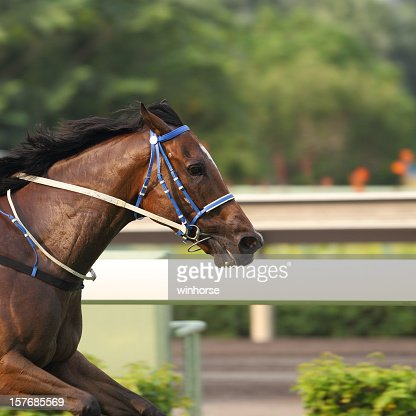 A shot of the front half of a horse racing outdoors