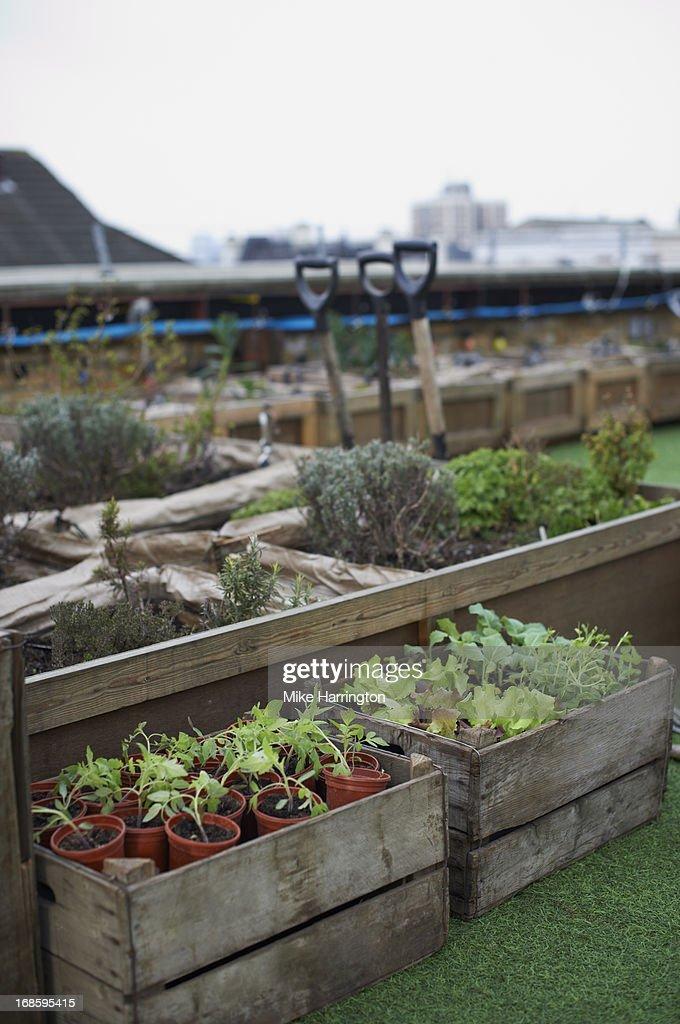 Shot of urban roof garden. Plants in crates. : Stock Photo
