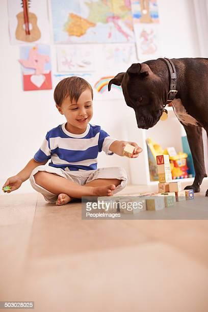 希望のお客様には、犬用宿泊しますか?
