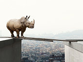rhino want to walk on wood beam danger concept