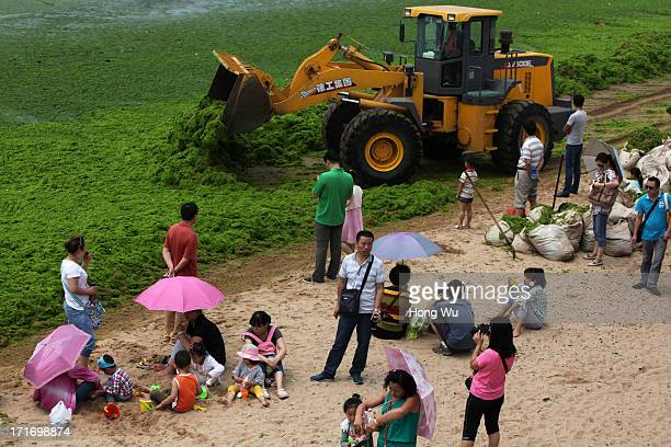Shovel loader cleans green algae at a beach covered by a thick layer of green algae on June 28 2013 in Qingdao China A large quantity of nonpoisonous...