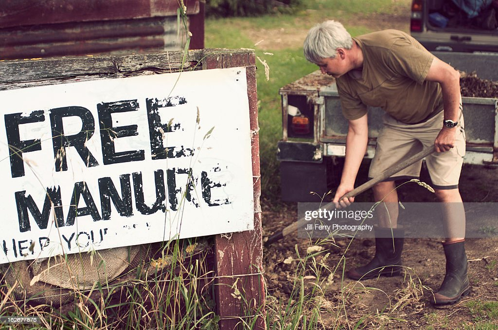Shovelling manure : Stock Photo