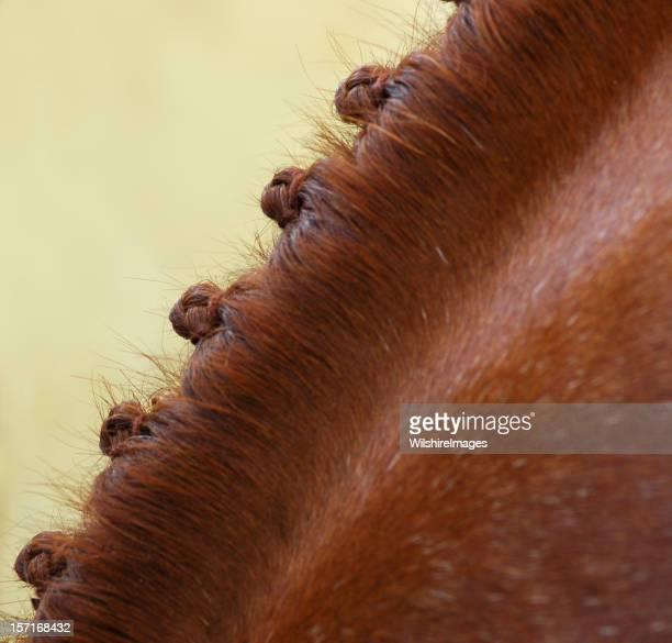 Show Horse Braids