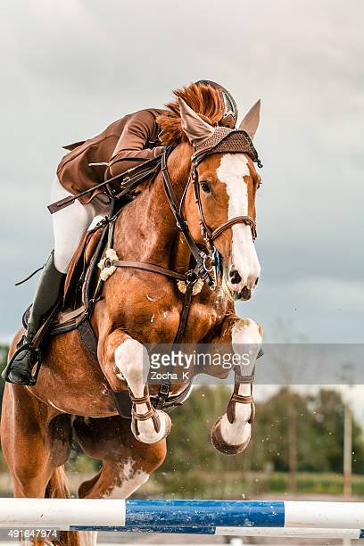 Show jumping - horse with rider jumping over hurdle