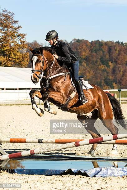 Show jumping training - horse with rider jumping over hurdle