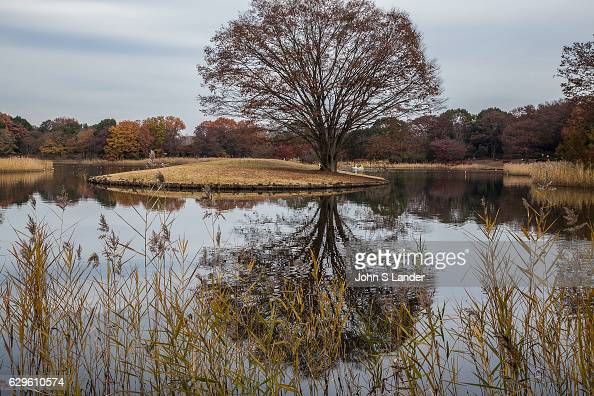 Showa Kinen Park is a large space surrounded by greenery in the outer suburbs of Tokyo A traditional Japanese garden was created in 1997 in a corner...