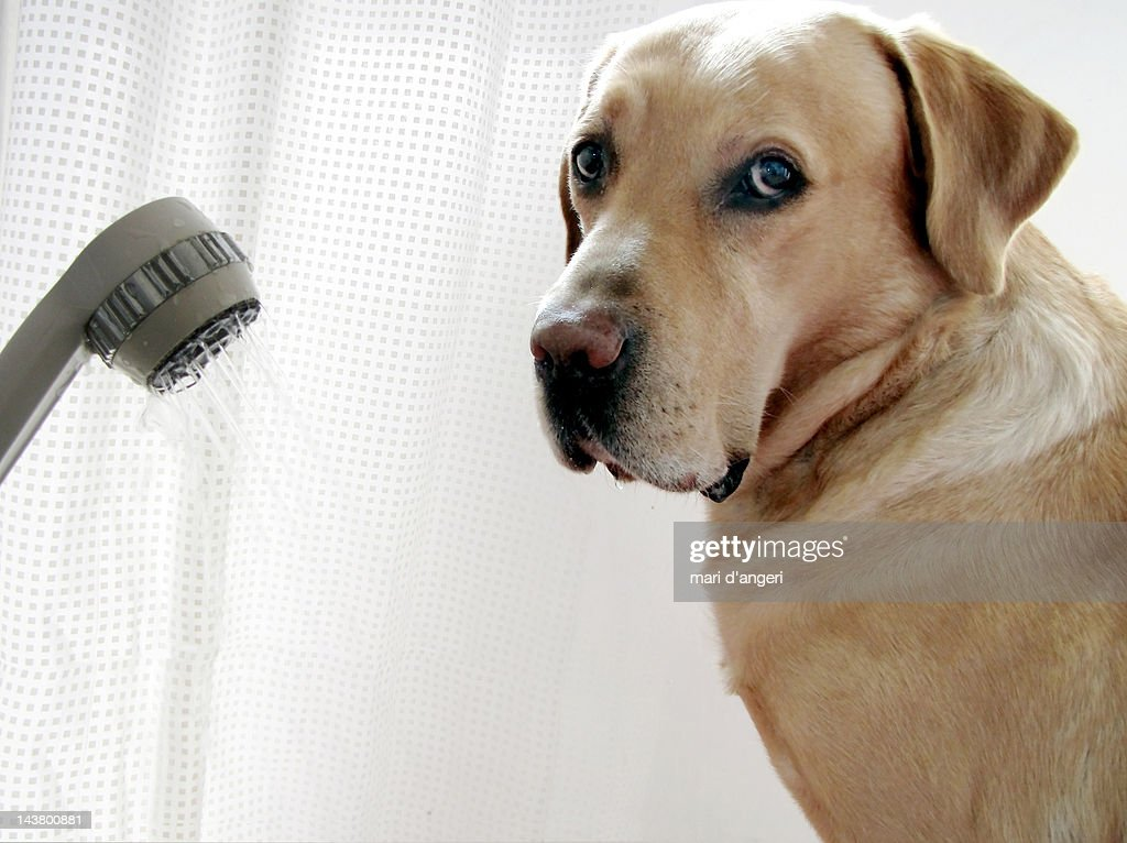 Shower With Dog : Stock Photo