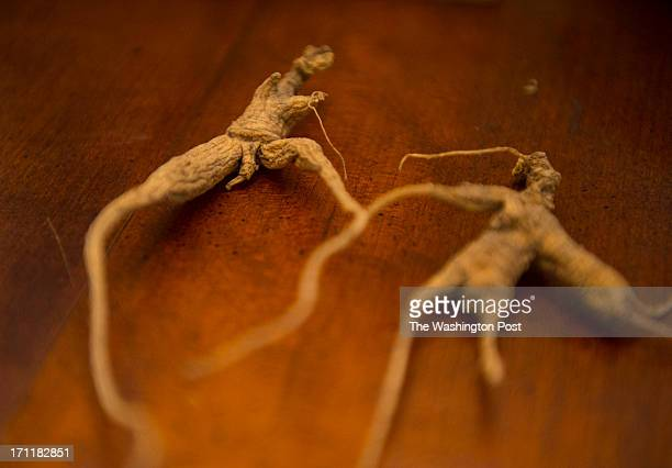 Shown are ginseng roots harvested by Steve Galloway owner of Catoctin Mountain Botanicals on June 5 2013 in Jefferson Md Ginseng farmer Steve...