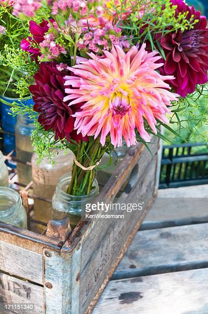 Dahlias Showy en vente