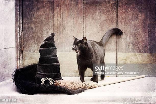 Shrieking halloween black cat