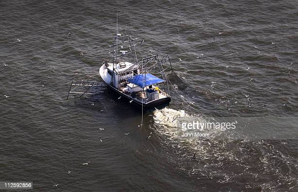 A shrimp boat trolls for its catch on April 19 2011 near Middle Ground in southern Louisiana A year after the BP oil spill coated Gulf coast beaches...