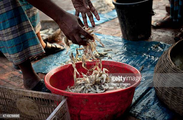 Shrimp is sold in a market in Shyamnagar February 21 2014 in the Satkhira District Bangladesh A recent report by the Environmental Justice Foundation...